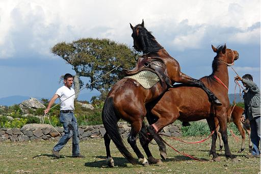 Apareamiento De Caballos Videos De Animales