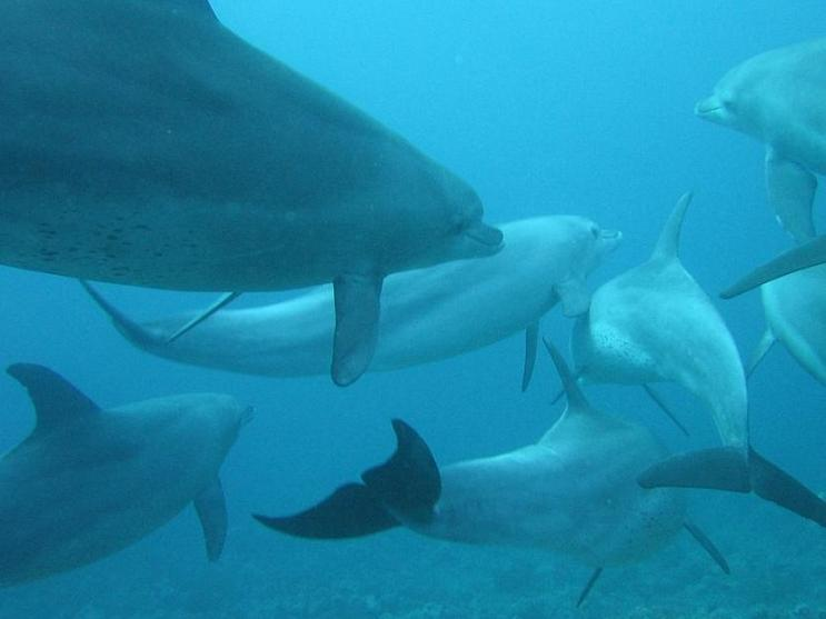 documental gigantes del mar delfines