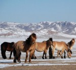 Documental de animales: Mongolia Salvaje