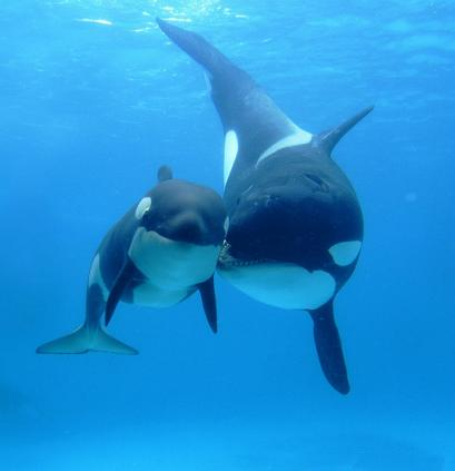 documentales animales orcas