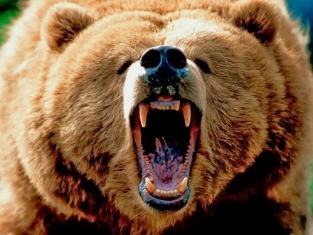oso grizzly gigante