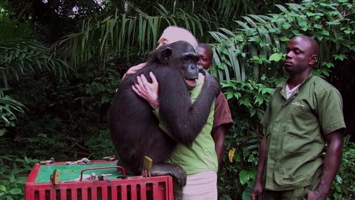 despedida-abrazo-jane-goodall-chimpace-Wounda